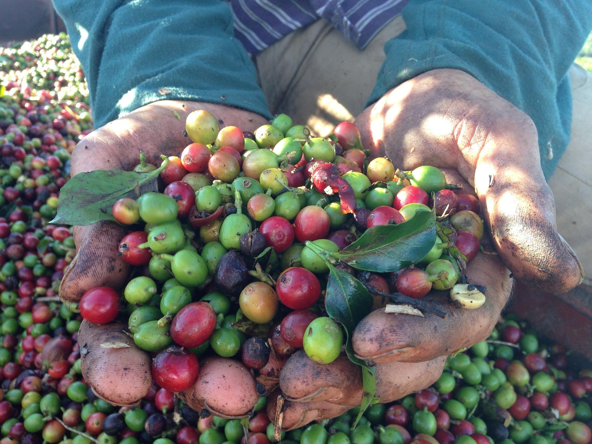 Tag des Kaffees in Brasilien