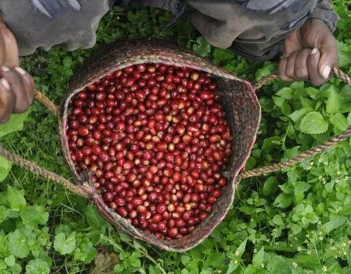 Jahresrückblick 2017 – Top 5 Kaffeeländer