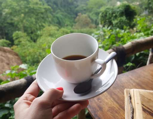 Finally on a coffee plantation