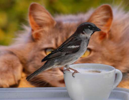 Kaffee und Tiere