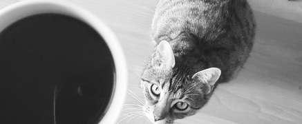 Katzenkaffee und Katzen Cafés
