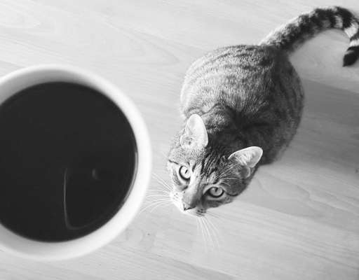 Cat Coffee and Cat Cafés