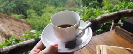 Finally on a coffee plantation