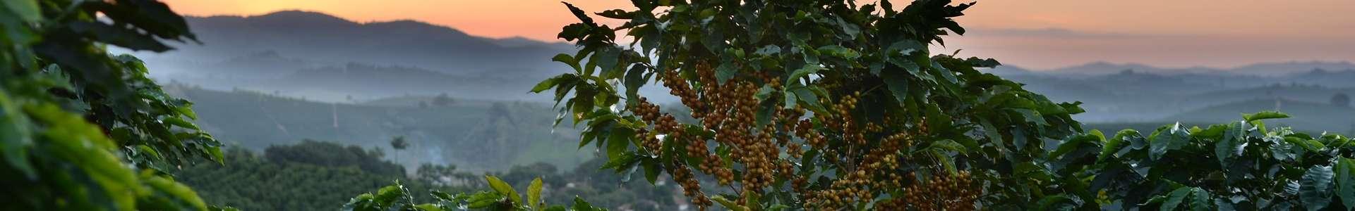 Coffee Documentations